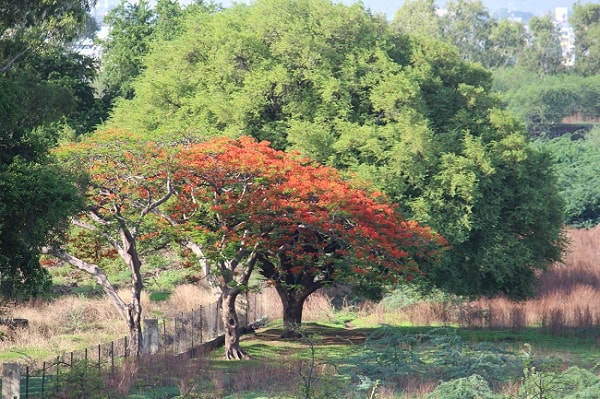 Himayat Baugh, the royal garden