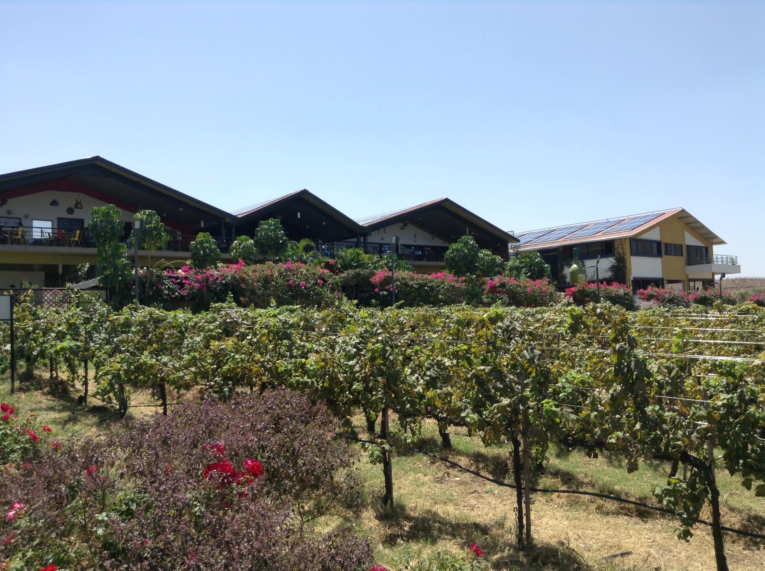Visite de vignoble et dégustation de vin à Nashik