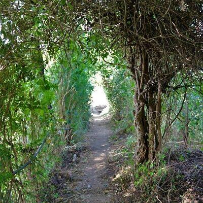 Chemin à Charthana, path at Charthana