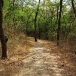 chemin autour du lonar lake, path around lonar lake